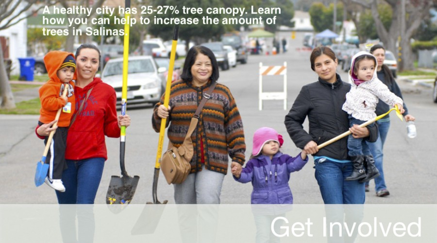Learn how you can help increase the amount of trees in Salinas.